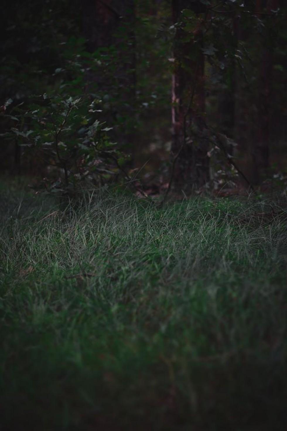 Андрій Петріщев. Ранковий ліс