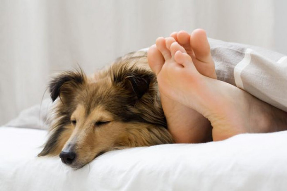Image result for people and animals sleeping