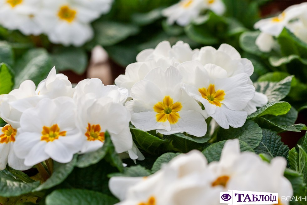 Професія крізь об'єктив: Тетяна Пашковська про роботу квітникаря