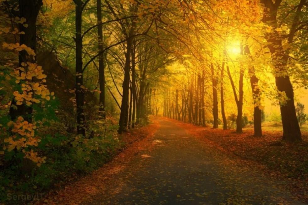 Чарівний осінній пейзаж в парку. Фото: Сергій Трофимов