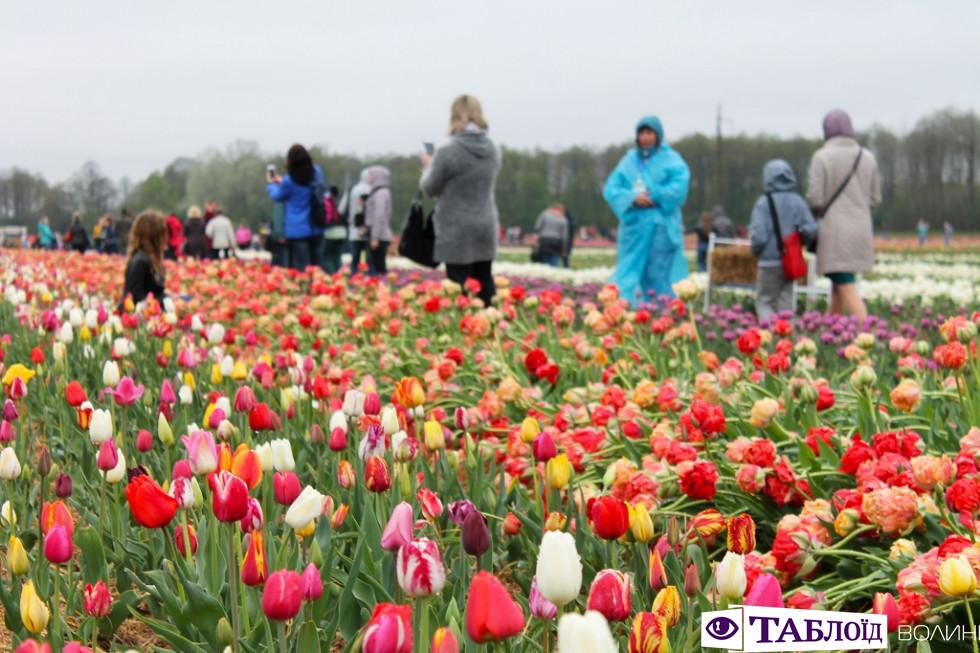 Перший день фестивалю «Волинська Голландія»