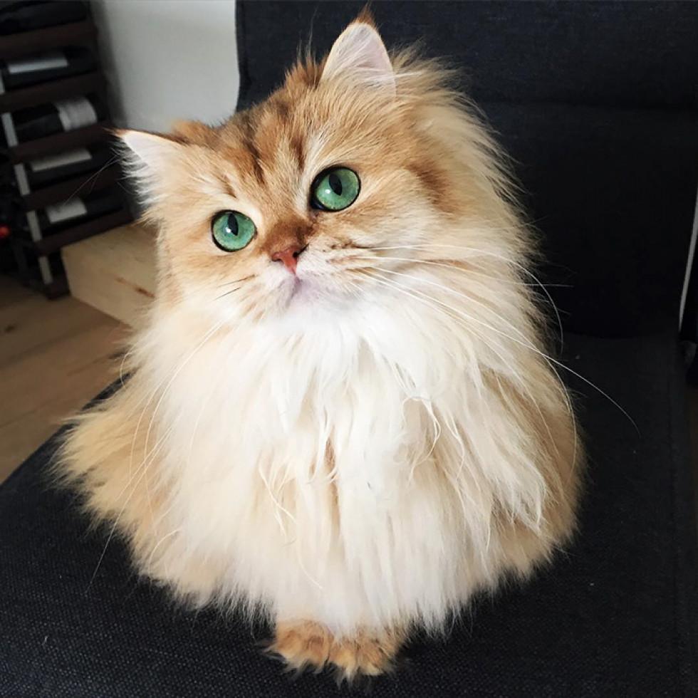 Котики-муркотики