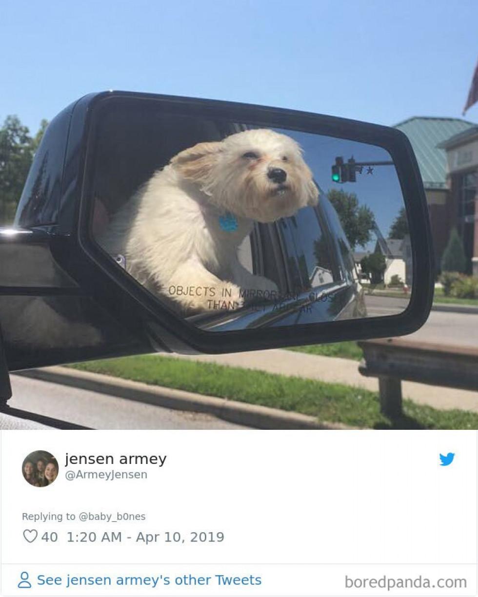 Невдалі фото тварин