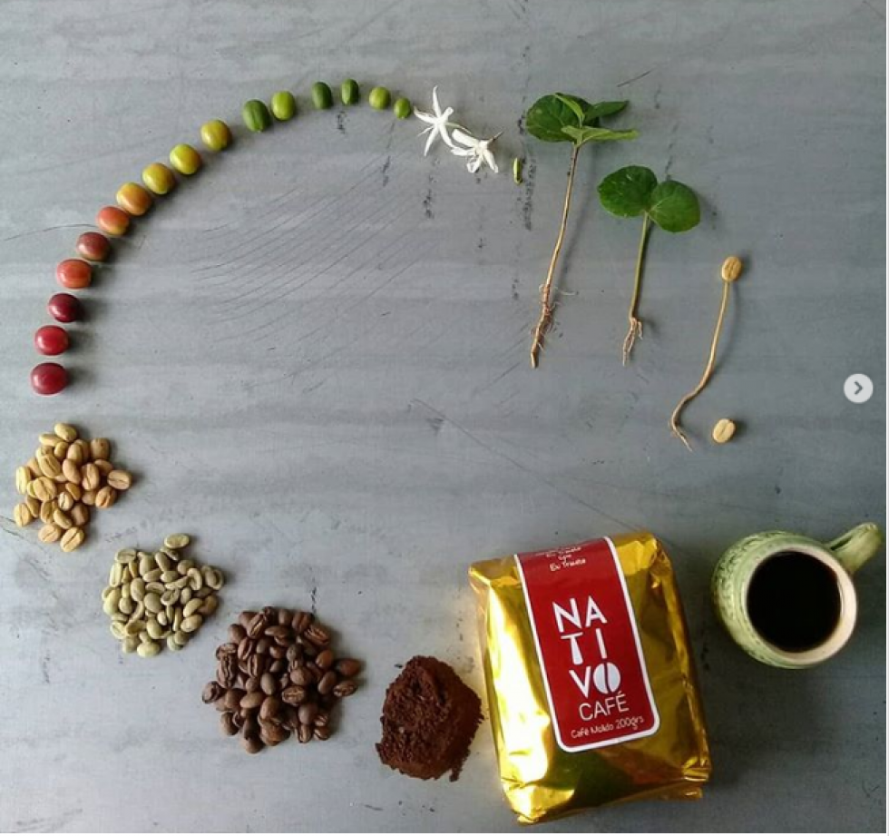 Зерна пройшли такий довгий шлях, щоб стати вашим горнятком кави