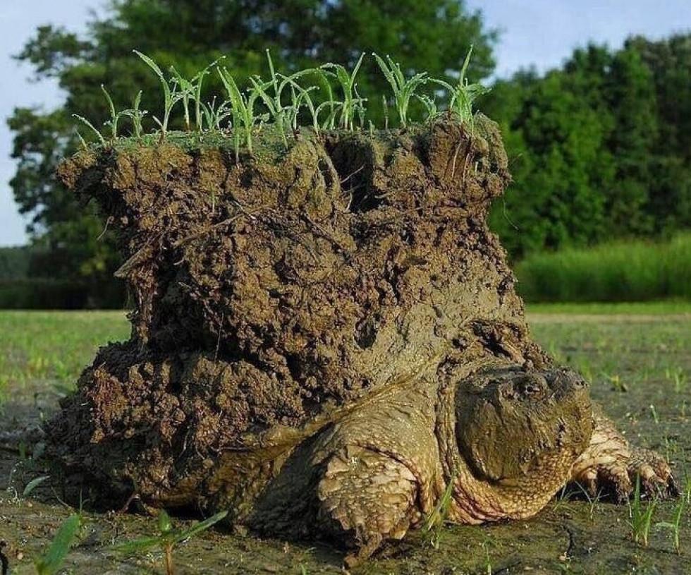 Черепаха вилазить на світ після зимової сплячки