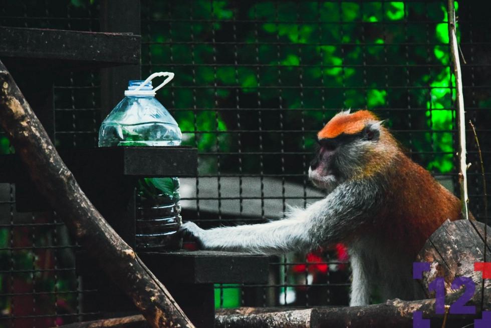 Що роблять мешканці Луцького зоопарку, коли їх не бачать людиЩо роблять мешканці Луцького зоопарку, коли їх не бачать люди