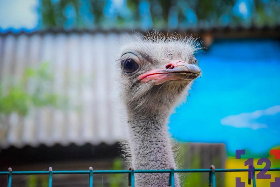 Що роблять мешканці Луцького зоопарку, коли їх не бачать люди