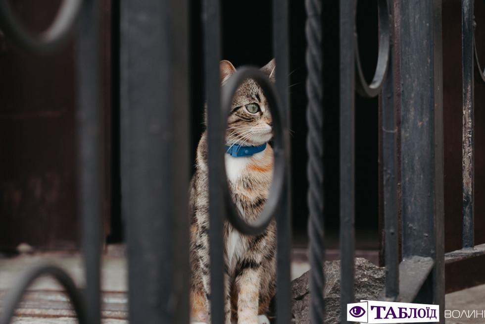 Волинський кіт
