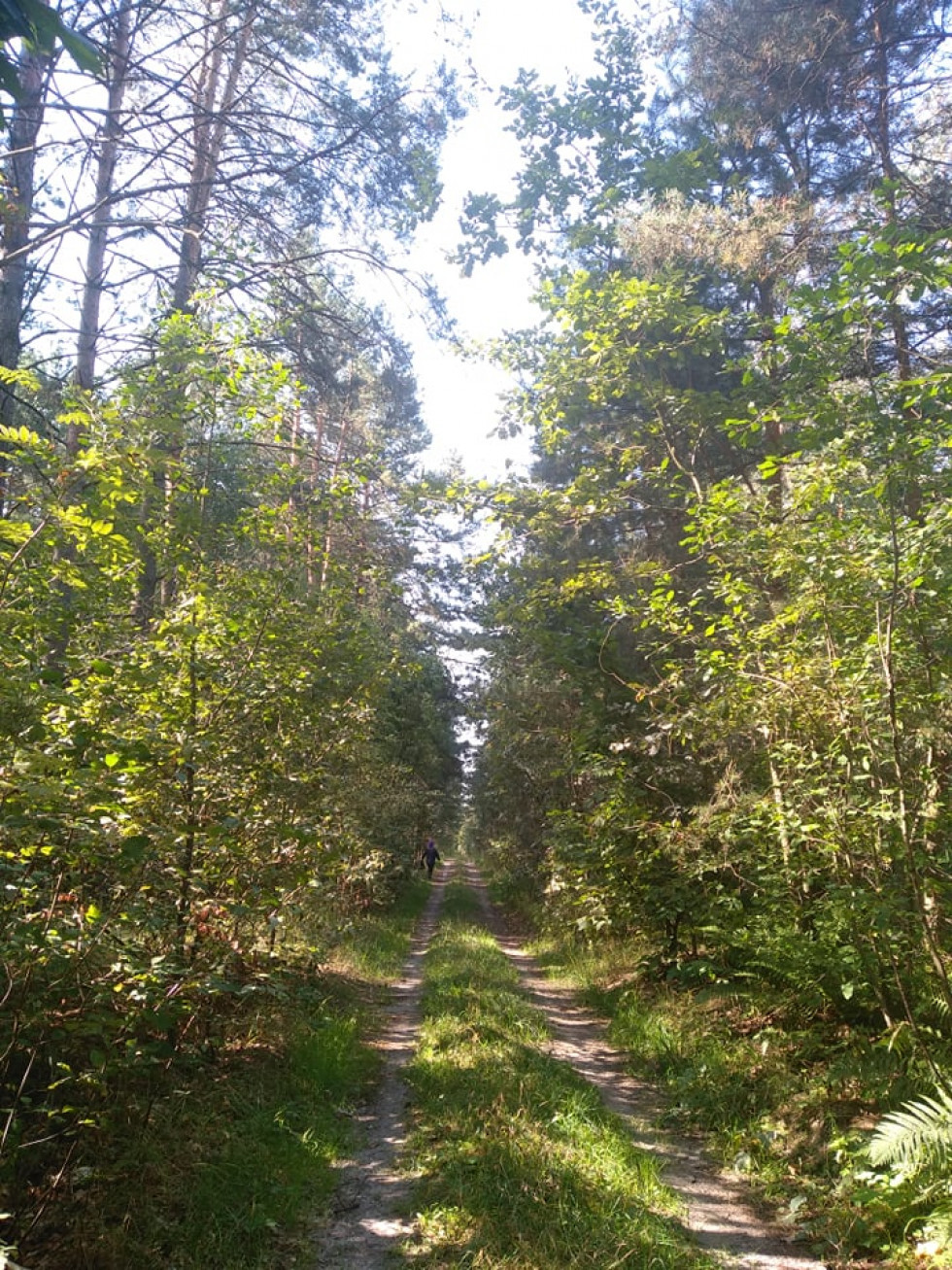 Гриби в турійських лісах