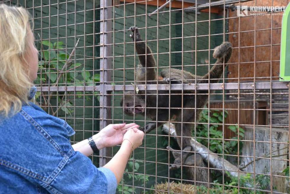 Мешканці Луцького зоопарку