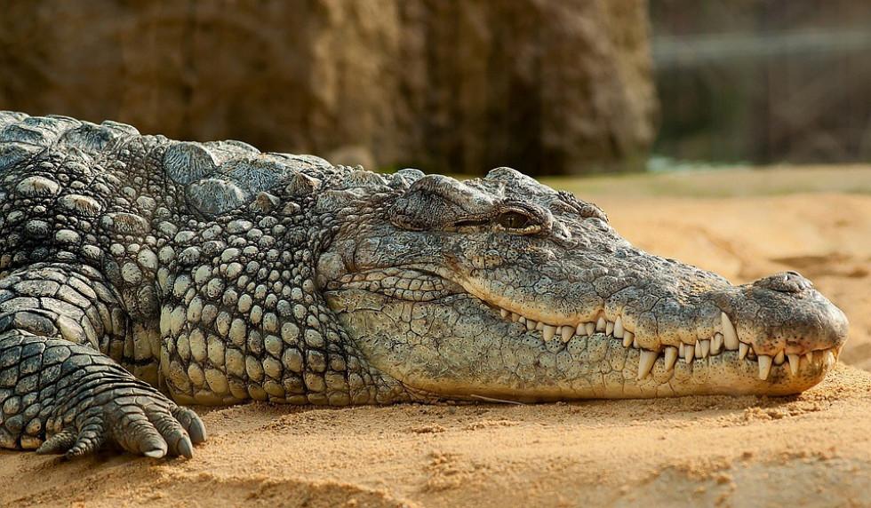 BLOG на нічку: яєчка горностая, крокодилячі екскременти та інші шалені види контрацепції