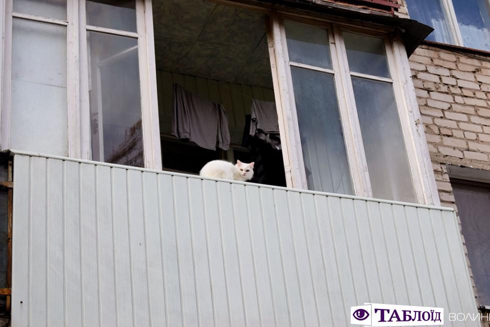 Луцьк ранковий: коти та багатоповерхівки 40-го кварталу