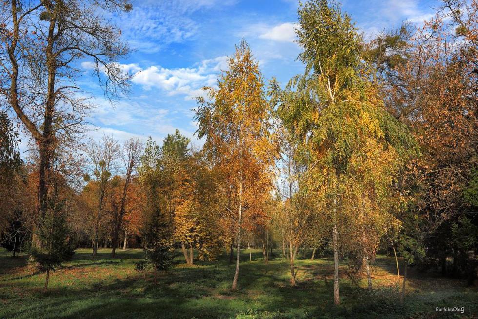 «Прогулянки парком. Луцьк... » Олег Бурлака