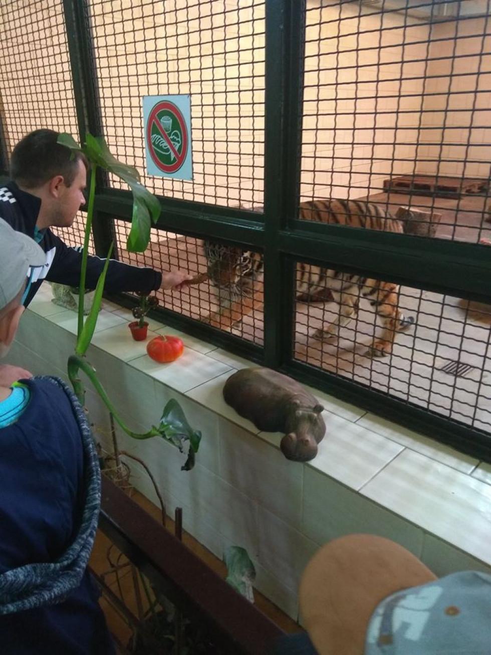 Відвідувач годує хлібом тигреня, якому не можна хліб