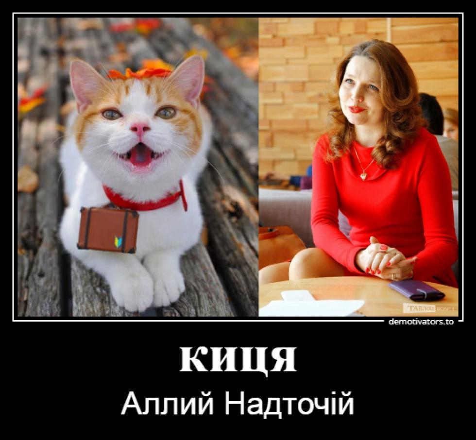 Пухнаста Луцькрада: якби коти були депутатами
