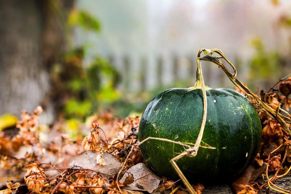 Коти та гарбузи: казкова осінь на світлинах волинянки