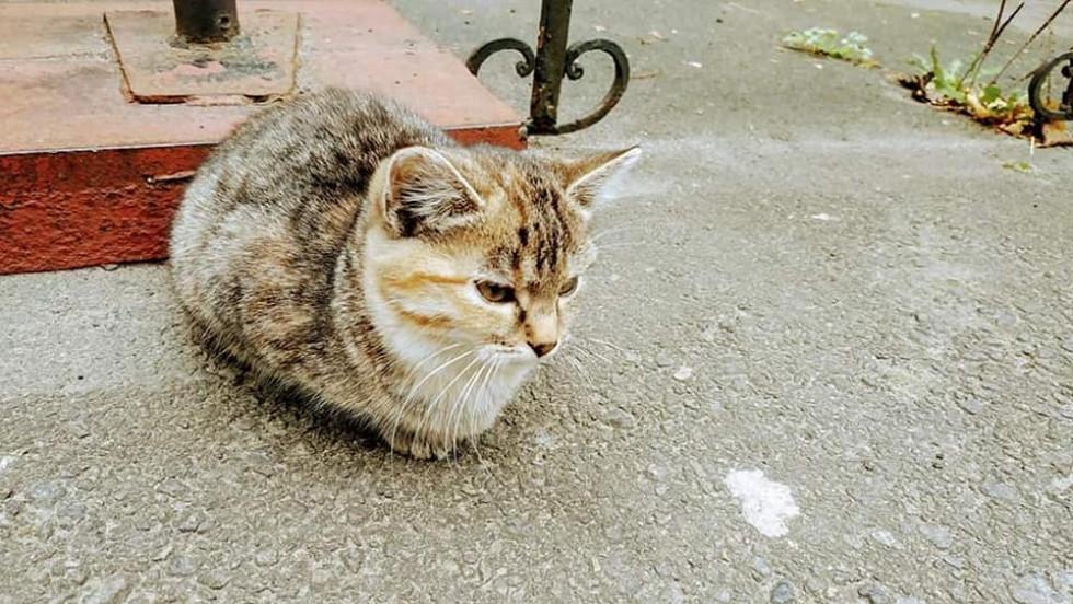 Котики Цитри