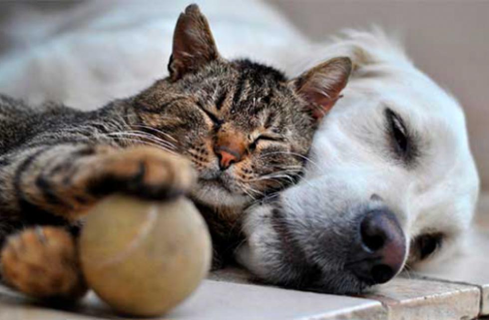 Луцька ветеринарка розповіла, чи передається корона вірус від тварин
