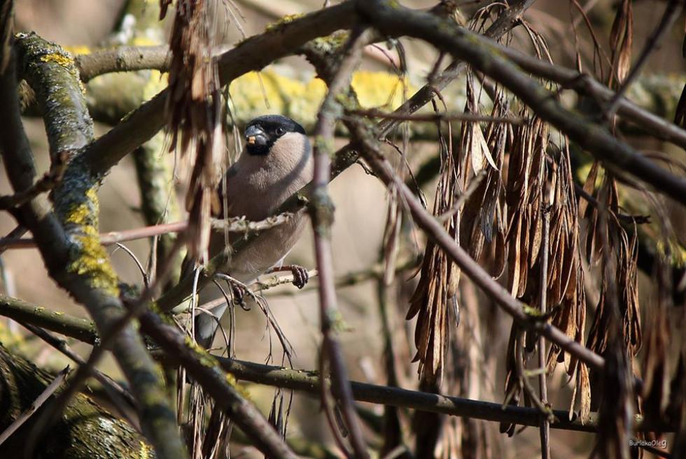 Синій птах, перші квіти і сонце – луцький фотограф прогулявся парком