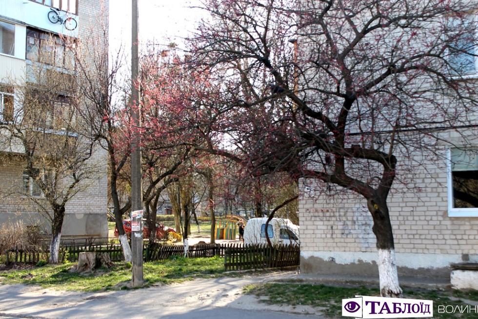 Перший цвіт і сонце: весна на луцьких вулицях. ФОТО