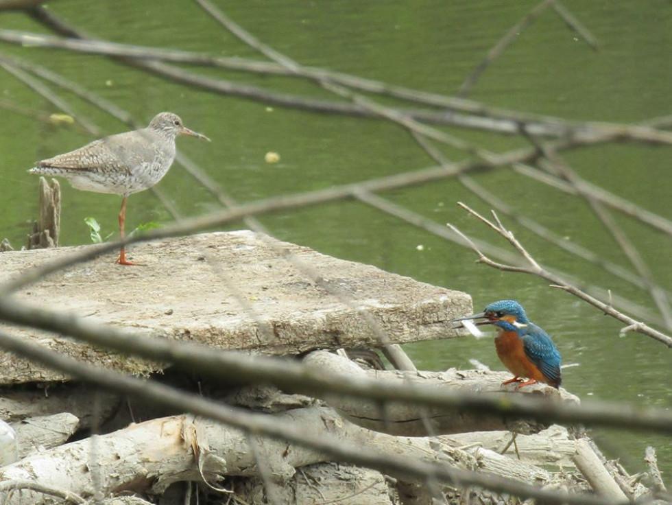 Блакитний птах: волинянин показав рибалочку на риболовлі