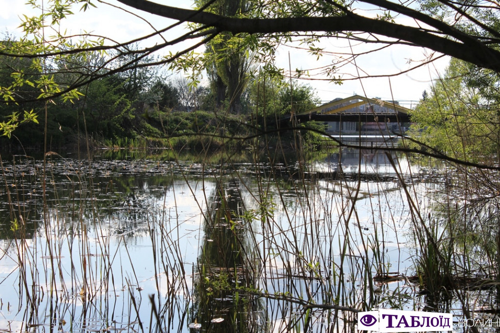 Лебеді, голуби та маленькі каченята: весна на Теремнівських ставках. ФОТО