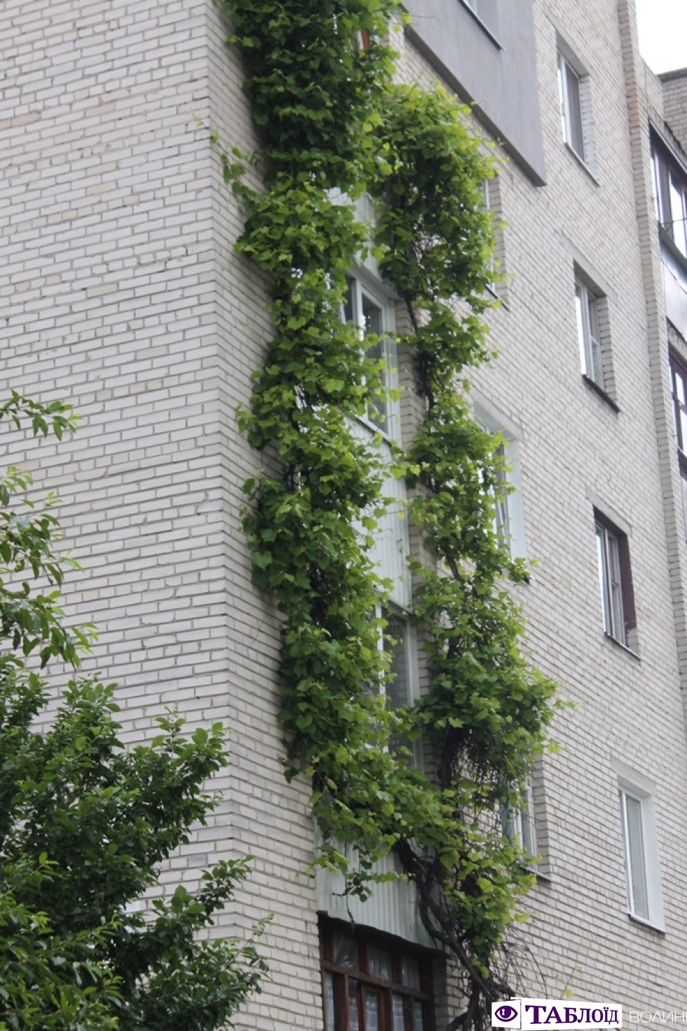 Балкони Луцька: проспект Відродження. Частина 2