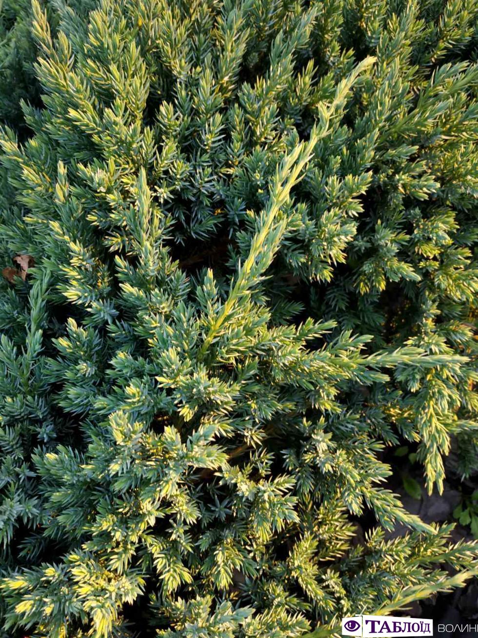 Ягоди та зелень: фотошпалери липня від «Таблоїда Волині»