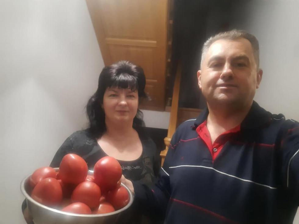 Домашні помідорки Петра Савчука