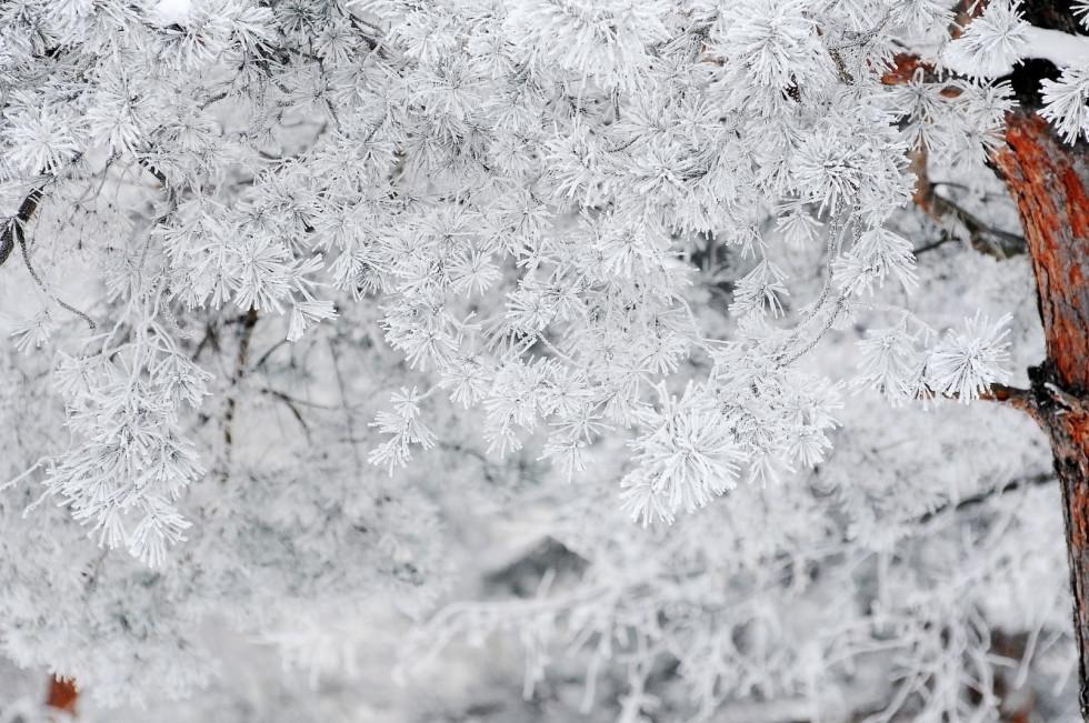 Фантастична зима Павла Березюка