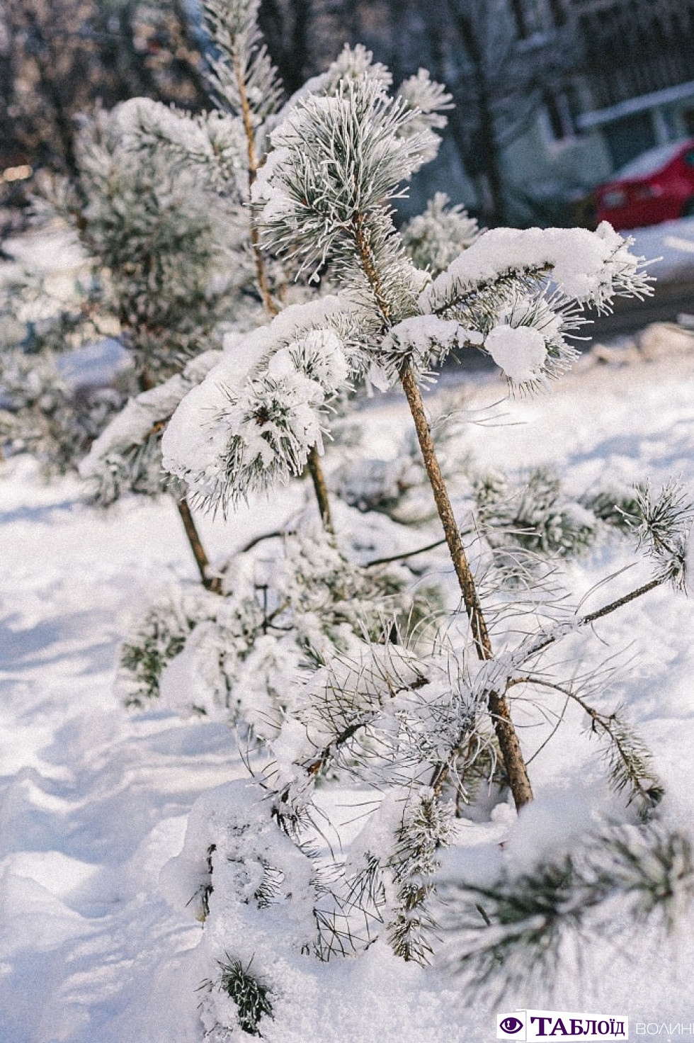 Зима в деталях: атмосферні макрознімкилуцької фотографки