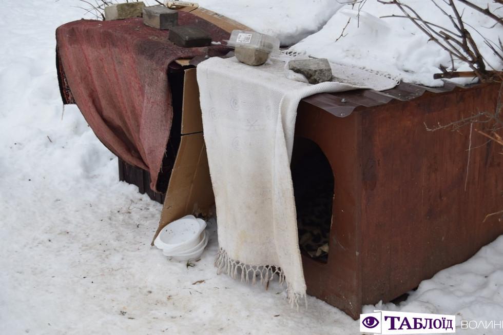 «Собачий готель» у луцькому дворі