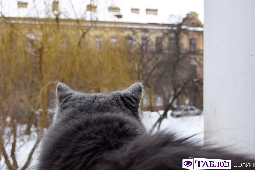 Цікавий світ за вікном